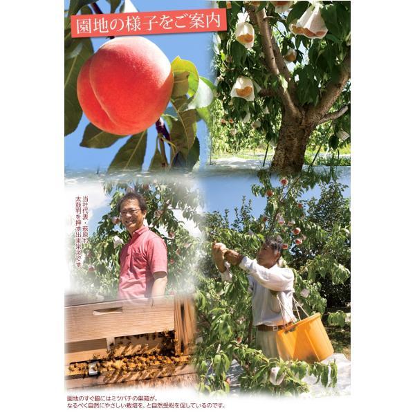 もも 桃 福島県産 菱沼農園 桃水&光月 約2kg (6〜8玉入) 送料無料 常温|umeebeccyasannriku|05