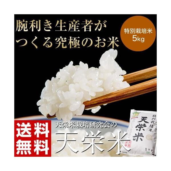 米 送料無料 福島県産 特別栽培米 天栄米 5キロ 精米 umeebeccyasannriku