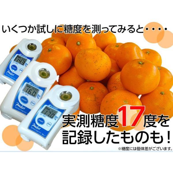 柑橘 フルーツ 愛媛県 中島地域産 訳あり せとか 約5kg S〜3Lサイズ 目安として16〜33玉 常温 送料無料|umeebeccyasannriku|02