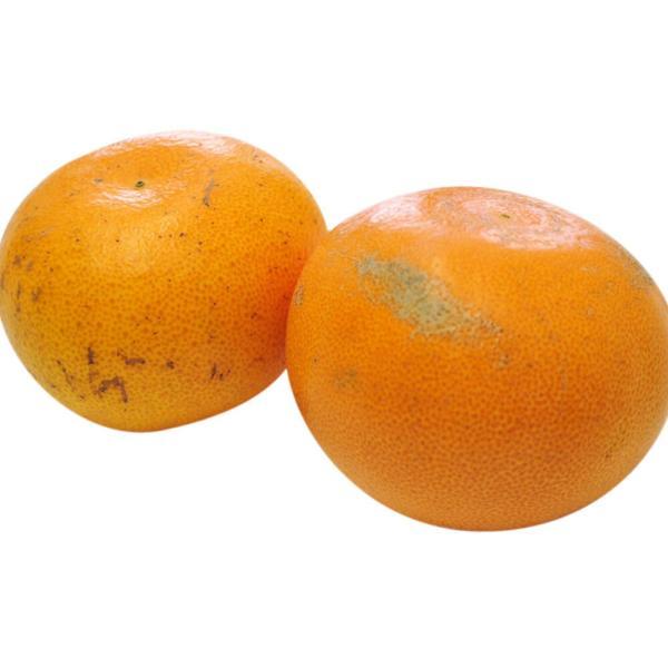 柑橘 フルーツ 愛媛県 中島地域産 訳あり せとか 約5kg S〜3Lサイズ 目安として16〜33玉 常温 送料無料|umeebeccyasannriku|11