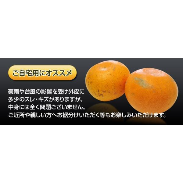 柑橘 フルーツ 愛媛県 中島地域産 訳あり せとか 約5kg S〜3Lサイズ 目安として16〜33玉 常温 送料無料|umeebeccyasannriku|05