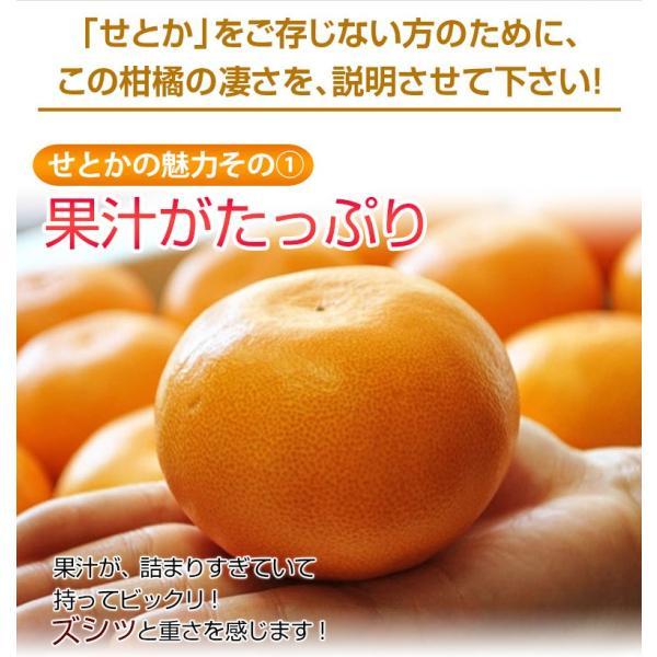柑橘 フルーツ 愛媛県 中島地域産 訳あり せとか 約5kg S〜3Lサイズ 目安として16〜33玉 常温 送料無料|umeebeccyasannriku|06