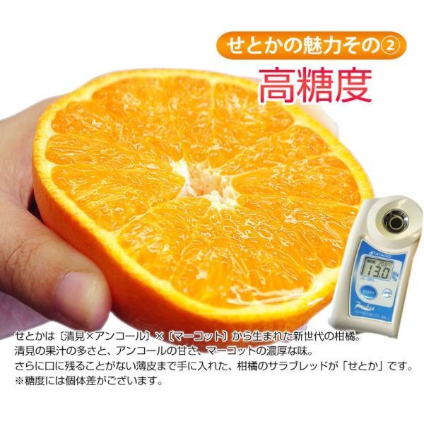 柑橘 フルーツ 愛媛県 中島地域産 訳あり せとか 約5kg S〜3Lサイズ 目安として16〜33玉 常温 送料無料|umeebeccyasannriku|07