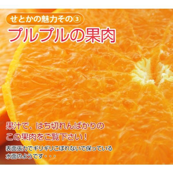 柑橘 フルーツ 愛媛県 中島地域産 訳あり せとか 約5kg S〜3Lサイズ 目安として16〜33玉 常温 送料無料|umeebeccyasannriku|08