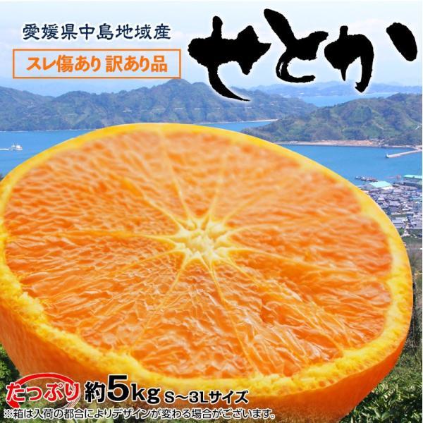 柑橘 フルーツ 愛媛県 中島地域産 訳あり せとか 約5kg S〜3Lサイズ 目安として16〜33玉 常温 送料無料|umeebeccyasannriku|09