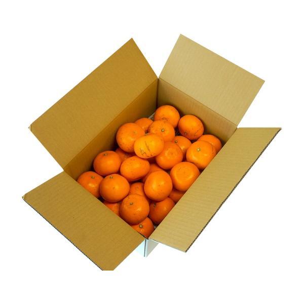 柑橘 フルーツ 愛媛県 中島地域産 訳あり せとか 約5kg S〜3Lサイズ 目安として16〜33玉 常温 送料無料|umeebeccyasannriku|10