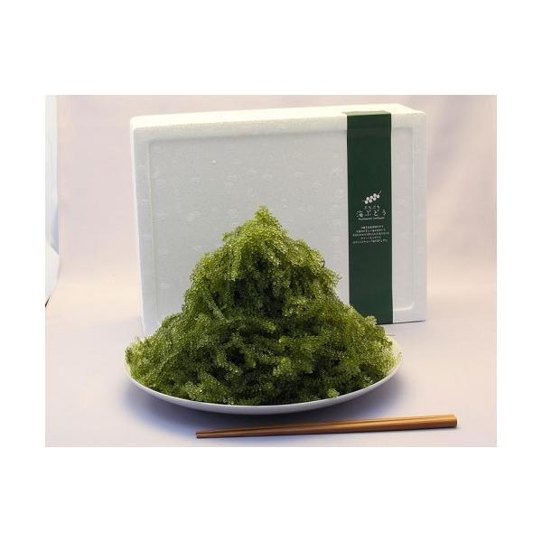 海ブドウ 沖縄県産 海ぶどう 約1kg シークヮーサーのタレ20個付き  常温 沖縄直送 送料無料