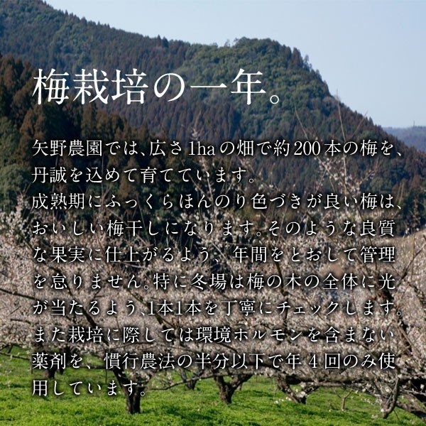 赤うめ酢500ml|umeyano|06