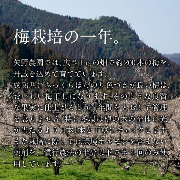 ご家庭用 豊の香梅 小梅干し 300g|umeyano|07