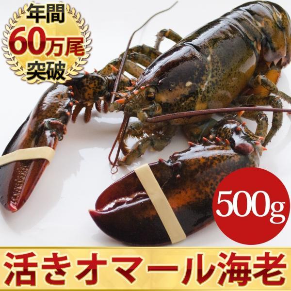 天然 活オマール海老(500g)1尾入 BBQに!お中元・お歳暮ギフトにも最適 uokatsu