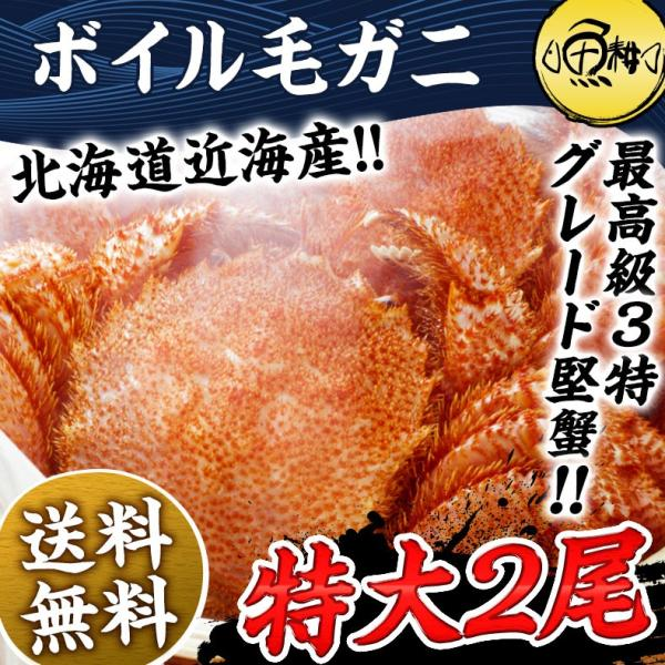お歳暮 毛ガニ 特大 北海道近海産 1kg ボイル 毛がに 毛蟹 500g×2尾 かに カニ 蟹 けがに ギフト プレゼント 送料無料|uoko-ec