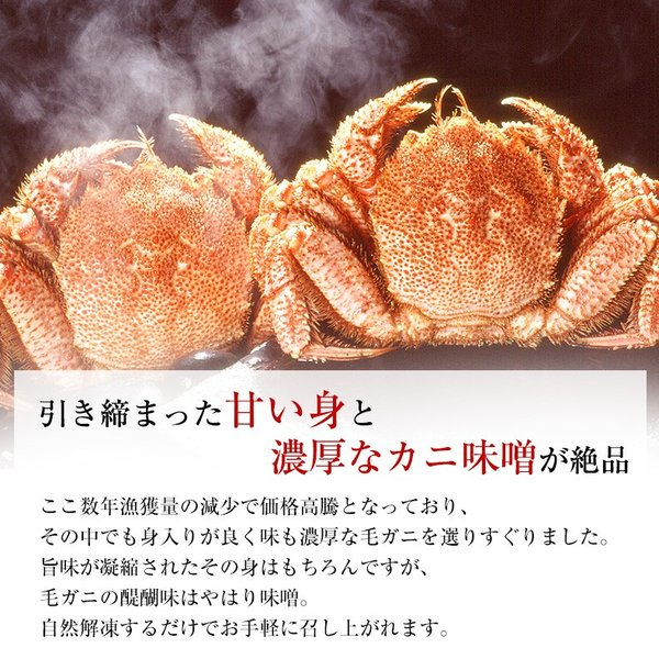 お歳暮 毛ガニ 特大 北海道近海産 1kg ボイル 毛がに 毛蟹 500g×2尾 かに カニ 蟹 けがに ギフト プレゼント 送料無料|uoko-ec|02