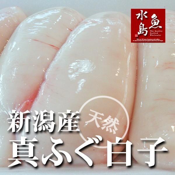 新潟産 天然マフグ 真ふぐ白子 小ぶりサイズ 冷凍500g