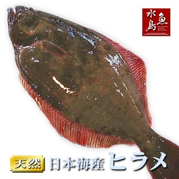 天然ヒラメ 平目 日本海産 3.0〜3.4キロ物