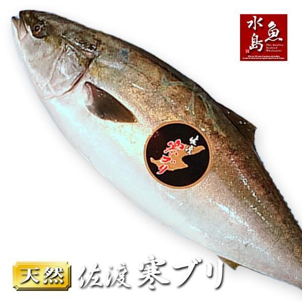 新潟 佐度産 天然 鰤 寒ブリ 「佐渡 寒ぶり」 8.0kg〜9.9kg 一尾丸もの 送料無料
