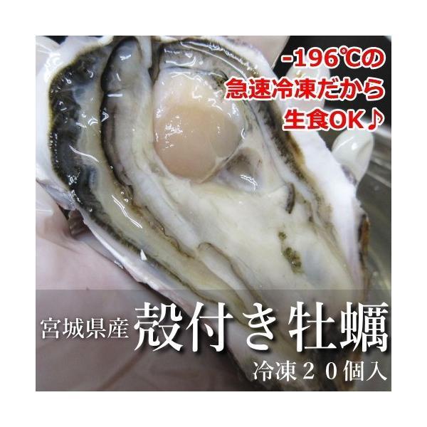 牡蠣 殻付き かき 生食可 宮城県産冷凍ハーフシェルオイスター 20個入り【他商品との同梱不可】|uoryu|02