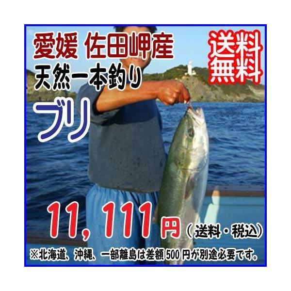 愛媛 佐田岬産 ( ブリ ) 天然一本釣り 4-5kg 浜から直送 送料無料 宇和海の幸問屋