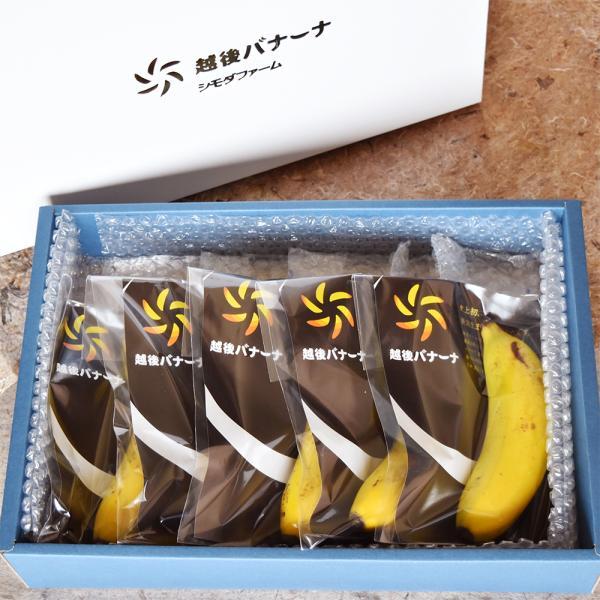 皮ごと食べられるバナナ 越後バナーナ ギフトボックス 約600gギフトセット 数量限定 国産 新潟県産 最高級バナナ