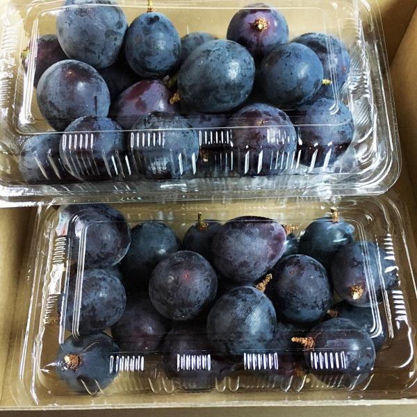 つぶ巨峰 250g×3パック 種なし 葡萄 家庭用 長野県産 産地直送