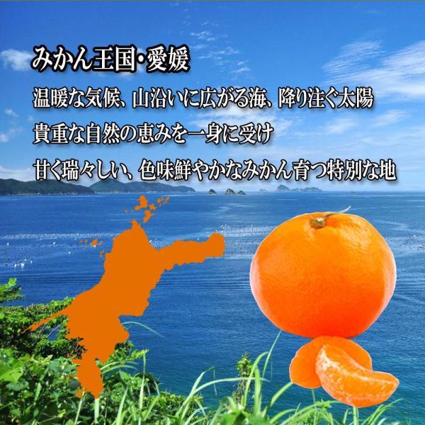デコみかん 訳あり 不知火 しらぬい キズ多め デコポン 約9kg M〜3L 送料無料|vegetable-fruit-pro|02