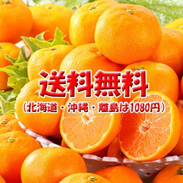 デコみかん 訳あり 不知火 しらぬい キズ多め デコポン 約9kg M〜3L 送料無料|vegetable-fruit-pro|03