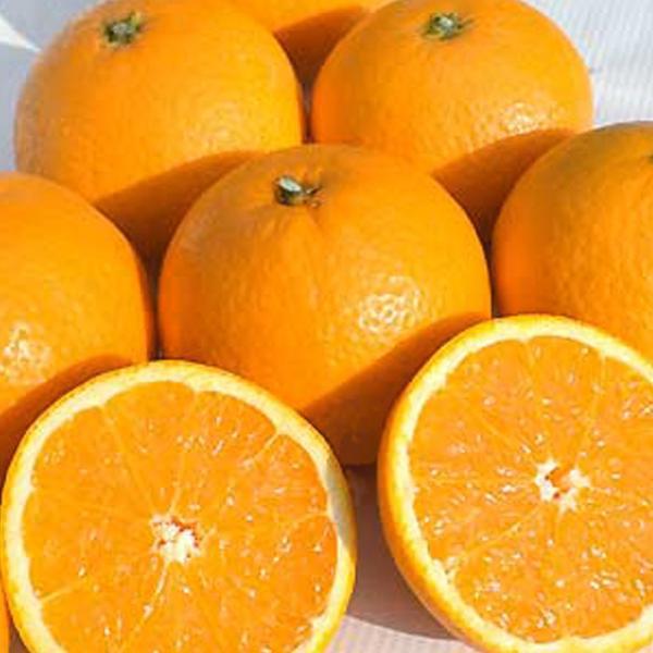 ジュース 贈答 清見タンゴールジュース みかんジュース 100% 750ml×3本 送料無料|vegetable-fruit-pro|03