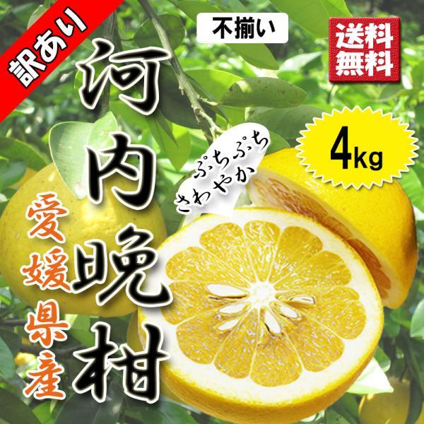 河内晩柑 訳あり 愛媛県産 和製グレープフルーツ ジューシーオレンジ M-3L 4kg 送料無料 セール|vegetable-fruit-pro
