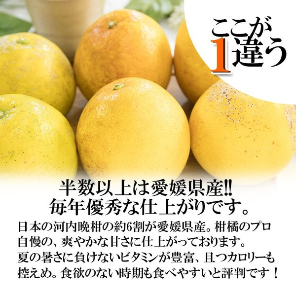 河内晩柑 訳あり 愛媛県産 和製グレープフルーツ ジューシーオレンジ M-3L 4kg 送料無料 セール|vegetable-fruit-pro|02