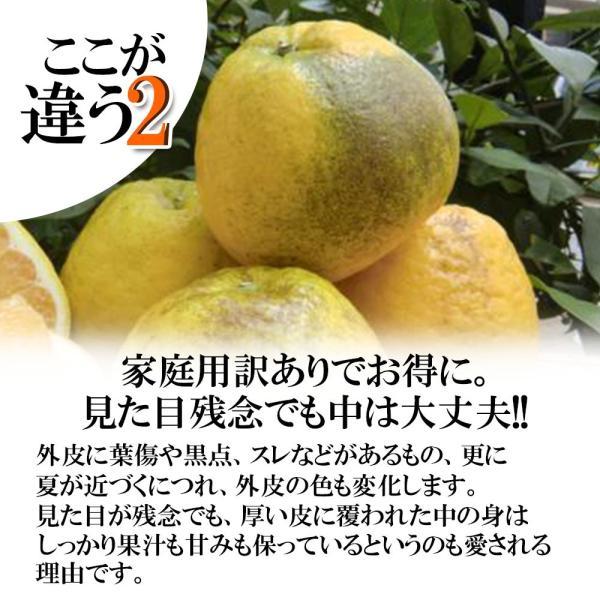 河内晩柑 訳あり 愛媛県産 和製グレープフルーツ ジューシーオレンジ M-3L 4kg 送料無料 セール|vegetable-fruit-pro|03