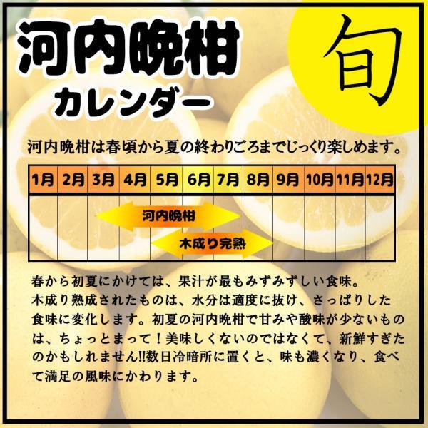 河内晩柑 訳あり 愛媛県産 和製グレープフルーツ ジューシーオレンジ M-3L 4kg 送料無料 セール|vegetable-fruit-pro|05