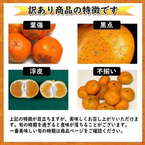 河内晩柑 訳あり 愛媛県産 和製グレープフルーツ ジューシーオレンジ M-3L 4kg 送料無料 セール|vegetable-fruit-pro|06