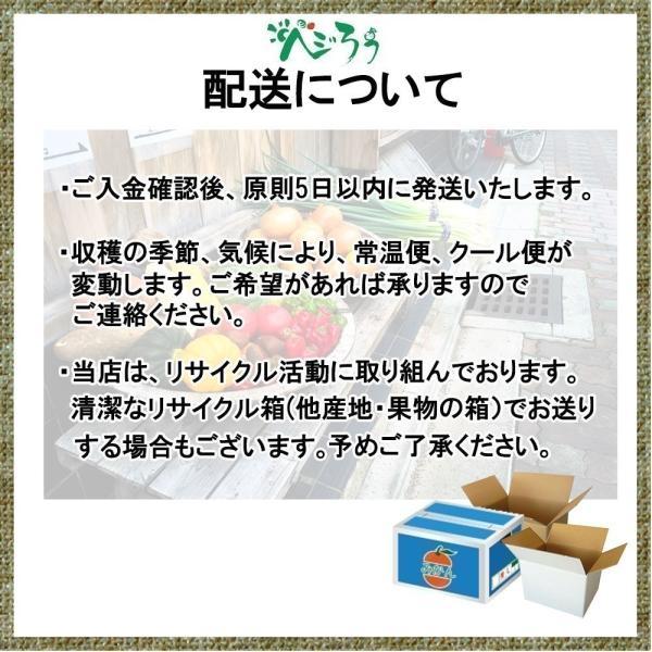 河内晩柑 訳あり 愛媛県産 和製グレープフルーツ ジューシーオレンジ M-3L 4kg 送料無料 セール|vegetable-fruit-pro|07