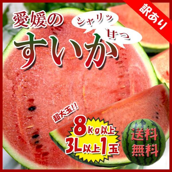 すいか 西瓜 愛媛県産 スイカ 送料無料 約8kg以上 超大玉 1玉 訳あり|vegetable-fruit-pro