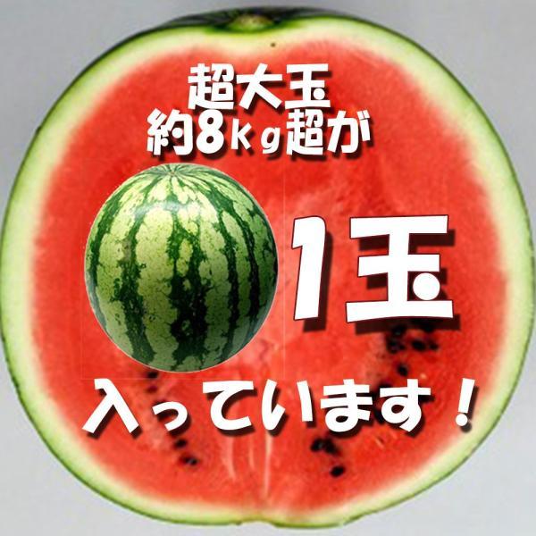すいか 西瓜 愛媛県産 スイカ 送料無料 約8kg以上 超大玉 1玉 訳あり|vegetable-fruit-pro|02