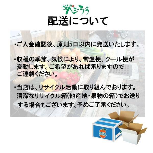 すいか 西瓜 愛媛県産 スイカ 送料無料 約8kg以上 超大玉 1玉 訳あり|vegetable-fruit-pro|06