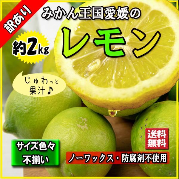 レモン 訳あり 愛媛県産 新物 檸檬 ノーワックス 防腐剤不使用 不揃い 2kg 送料無料 セール|vegetable-fruit-pro