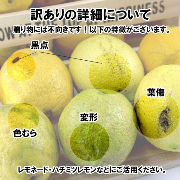レモン 訳あり 愛媛県産 新物 檸檬 ノーワックス 防腐剤不使用 不揃い 2kg 送料無料 セール|vegetable-fruit-pro|04