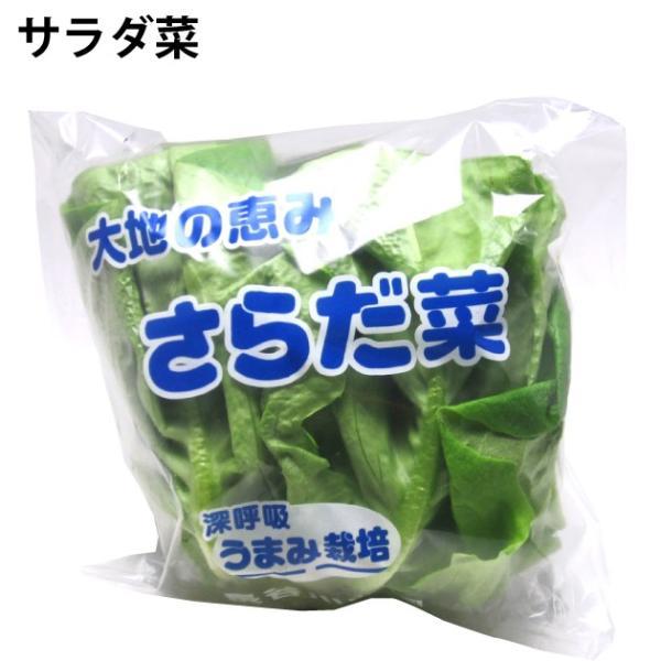 サラダ菜 新潟産 低農薬 5玉 送料込