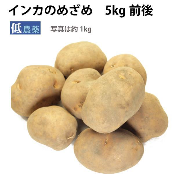 じゃがいも ジャガイモ インカのめざめ 5kg  送料込