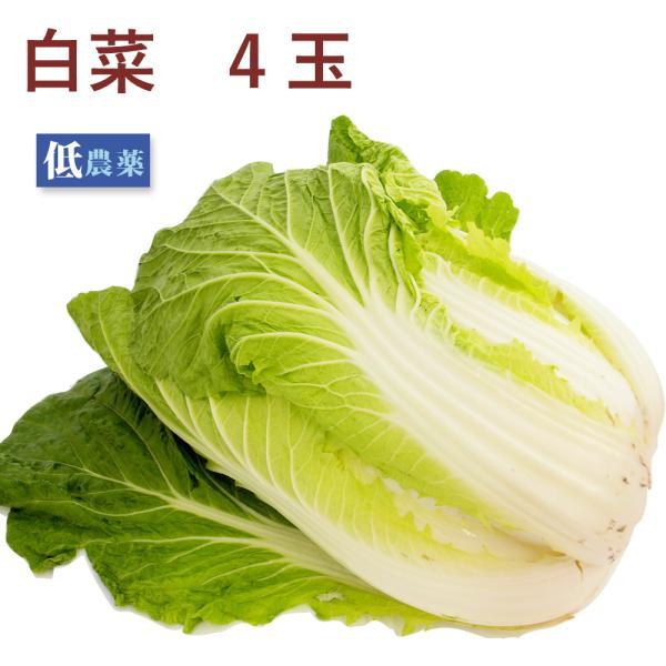 白菜 4玉 低農薬栽培 送料込