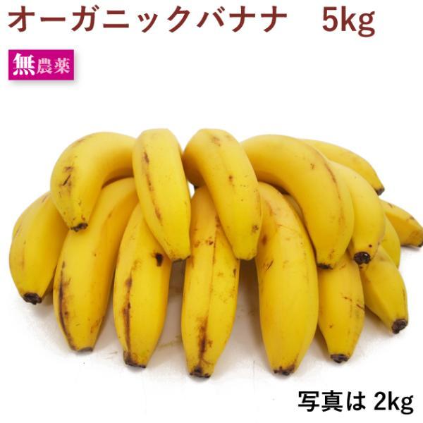 送料込 有機 オーガニック バナナ 5kg 中南米産