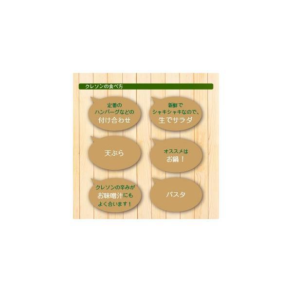 送料無料 クレソン 500g 静岡県産 山梨県産 無農薬栽培 サラダ|vegetable-heart|04