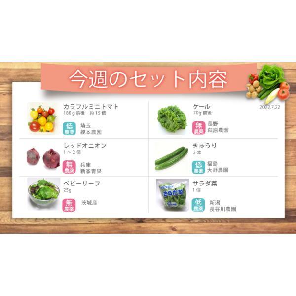 野菜 野菜セット 無農薬 低農薬 こだわり サラダ野菜セット 送料無料|vegetable-heart|03
