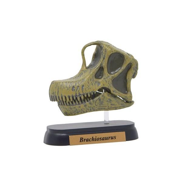 フィギュアダイナソーミニモデルブラキオサウルス恐竜スカルシリーズフェバリット頭骨フィギュア