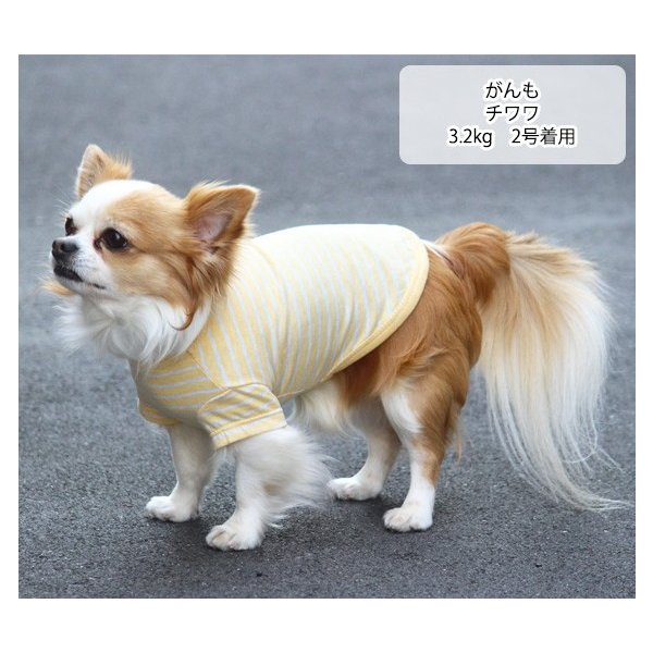 犬 服 VERY 小型犬 特価 WEB限定 ボーダーTシャツ 2号・3号・4号・5号・D3号・D4号 在庫限り ドッグウェア|very-pet|06