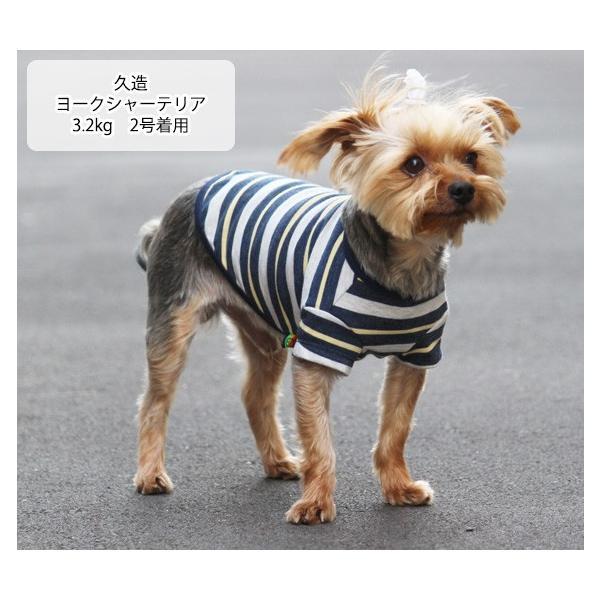犬 服 VERY 小型犬 特価 WEB限定 ボーダーTシャツ 2号・3号・4号・5号・D3号・D4号 在庫限り ドッグウェア|very-pet|07