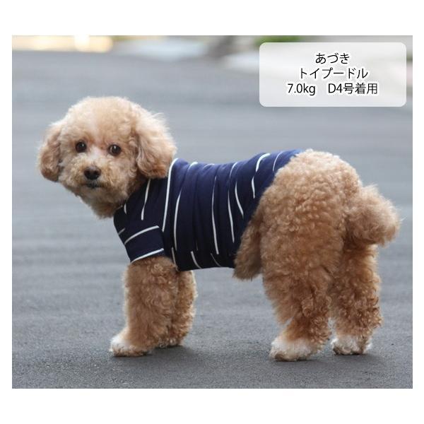 犬 服 VERY 小型犬 特価 WEB限定 ボーダーTシャツ 2号・3号・4号・5号・D3号・D4号 在庫限り ドッグウェア|very-pet|08