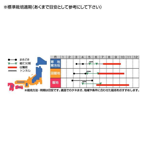 野菜の種/種子 イエローアイコ・ミニトマト 13粒(メール便発送)サカタのタネ 種苗|vg-harada|02