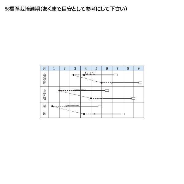 野菜の種/種子 バターナッツ・カボチャ 18粒(メール便発送)タキイ種苗|vg-harada|02