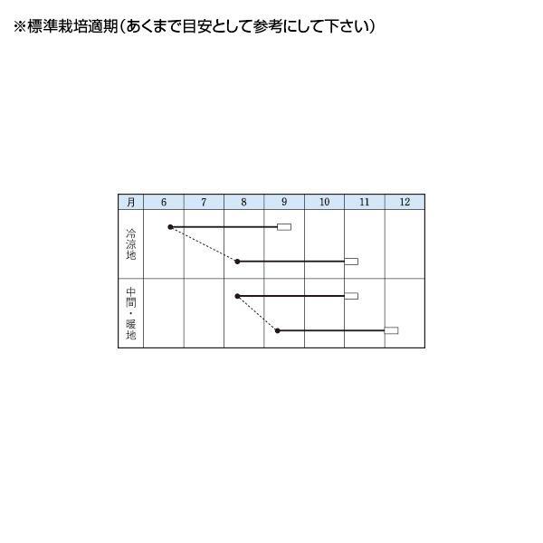 野菜の種/種子 信州大そば 1dl(メール便発送)タキイ種苗|vg-harada|02